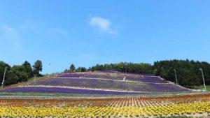 nakafurano/lavender/park