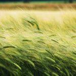 furano/summer/field