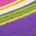 furano/lavender/farm/tomita