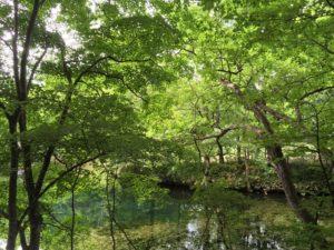 furano/torinuma/park