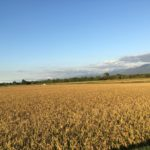 furano/autumn/landscape
