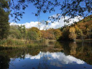 furano/torinuma-park/autumn