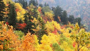 mt.tokachidake/autumn-leaves