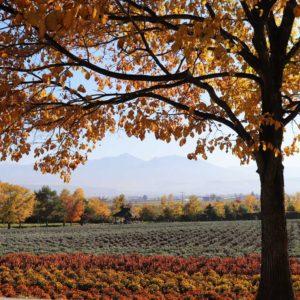 farm-tomita/autumn