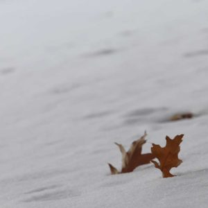 furano-november