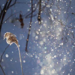 furano-winter-morning