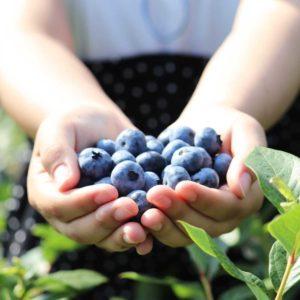 furano-blueberry