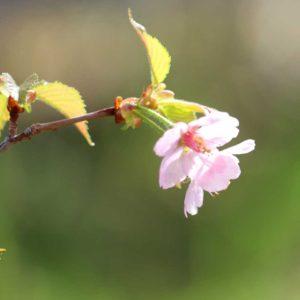 furano-four-seasons