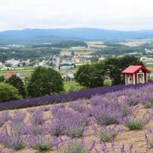 hinode/lavender/park