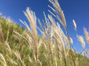 furano/autumn-herb