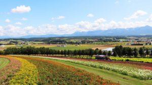 flower-land/kamifurano