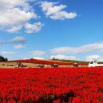 kannno-farm/autumn