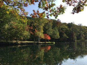 furano/autumn-leaves