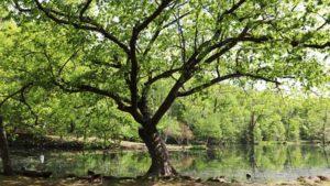 furano-torinuma-park-four-seasons