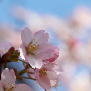 furano-may-spring