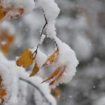furano from autumn to winter
